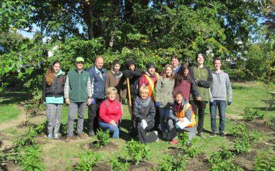 Plantation d'un espace vert à Repentigny (2015)