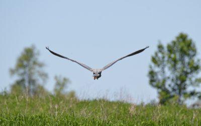Comité de concertation permanent de la Zone Importante pour la Conservation des Oiseaux (ZICO)